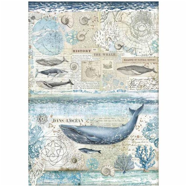 Papel de arroz decoupage A3 Artic Antartic Cristina Radovan History of the whale