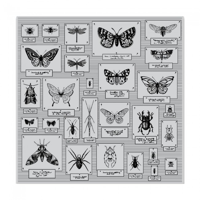 Tampon en Caoutchouc Bug Collection Bold Prints
